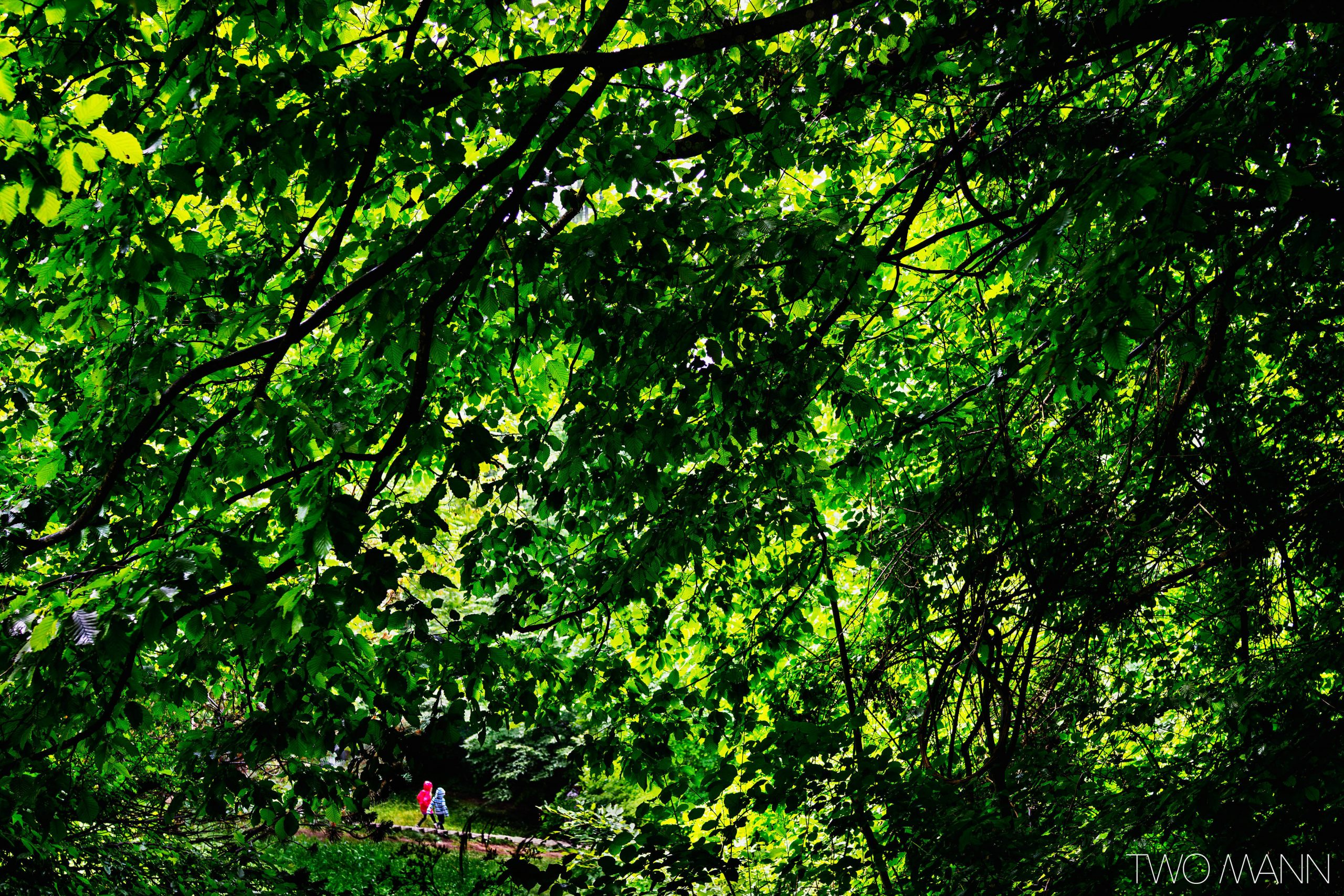 Kids walking on red soil path in lush green forest