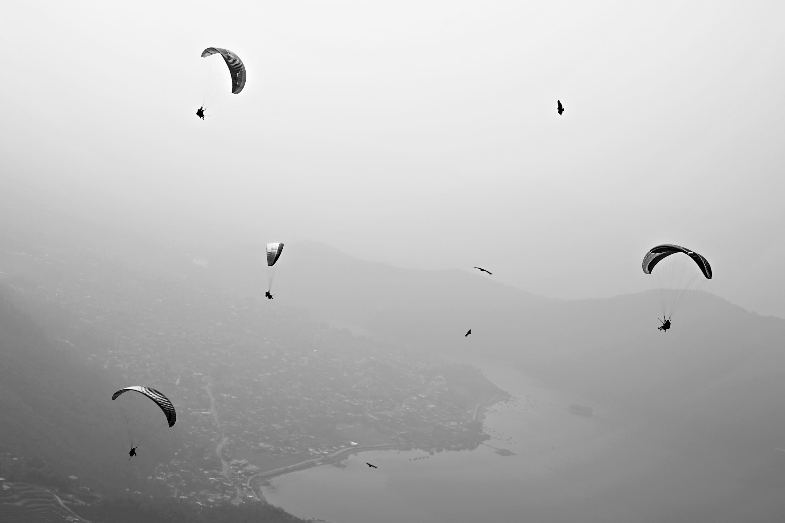 Several paragliders in the sky