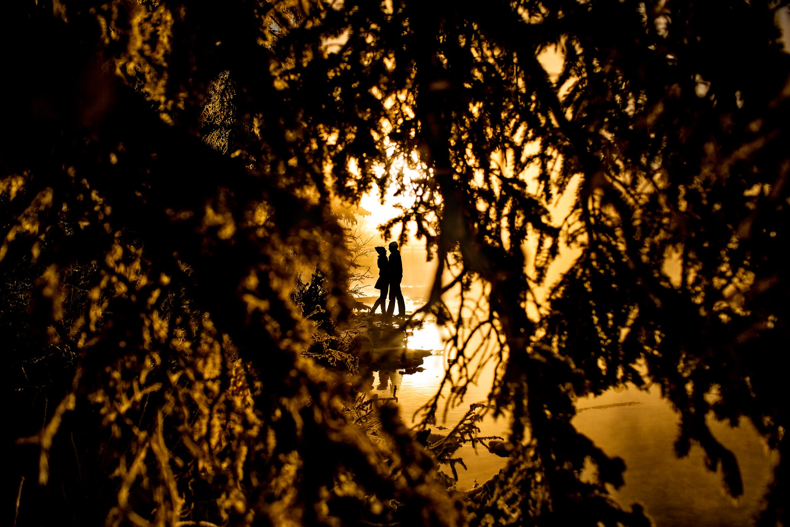 Silhouette of couple shrouded by tree branches is illuminated by sunlight