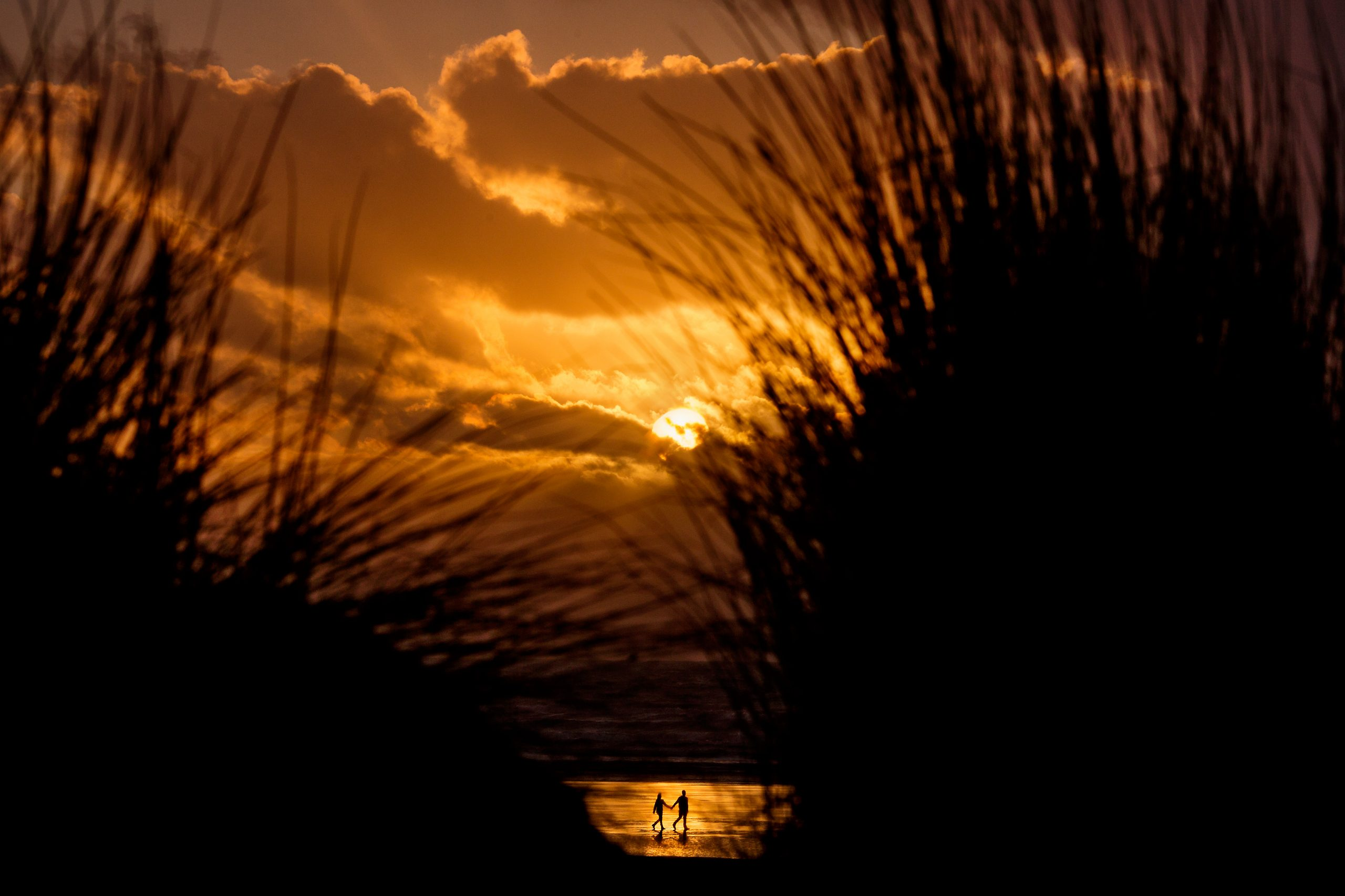 Shrouded by the silhouette of grass, a couple walk across a beach sunset, holding hands