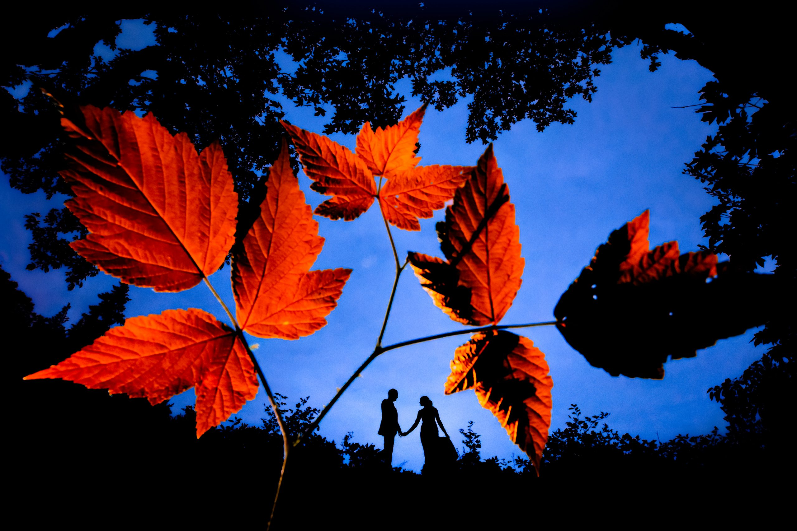 Silhouette of bride and groom holding hands behind autumn leaves