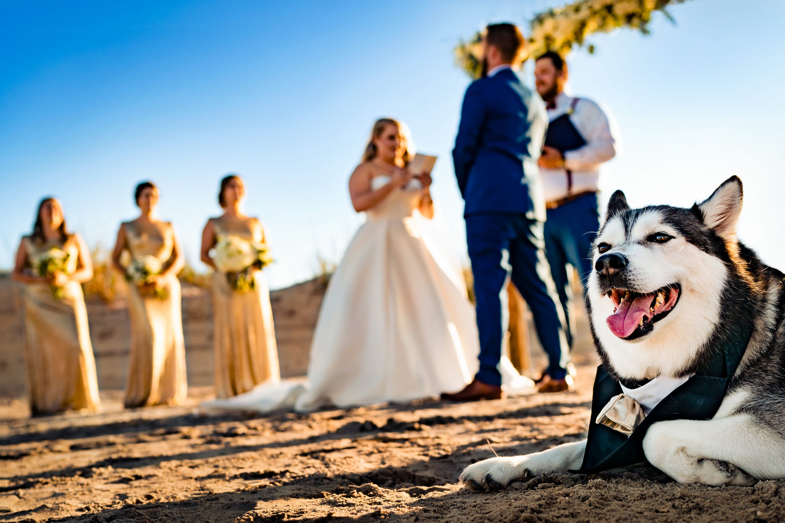A happy, well-dressed dog enjoys the exchanging of vows at the wedding ceremony.